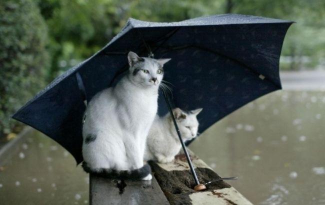 Назападе Украины пройдут дожди, наюге до