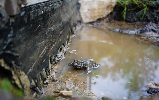 Жителям Тернополя продавали отравленную химикатами воду