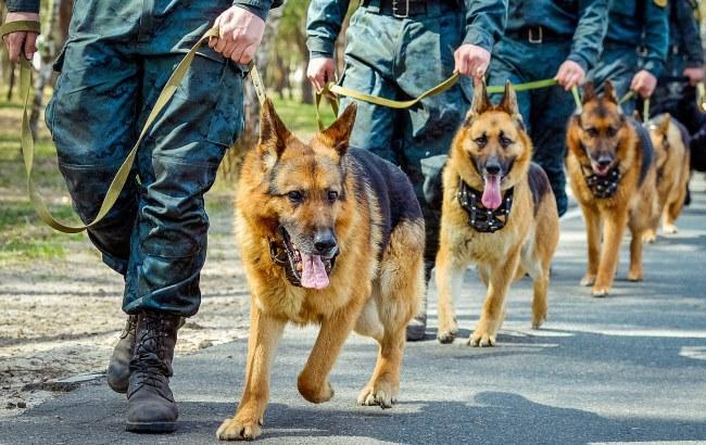 Фото: Нацгвардейцы с собаками (flickr.com/photos/ng_ukraine)