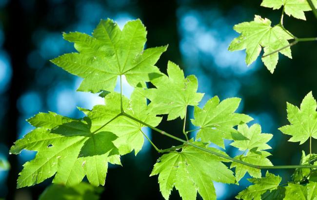 Фото: Листя на деревах фарбували за вказівкою начальства (medium.com)