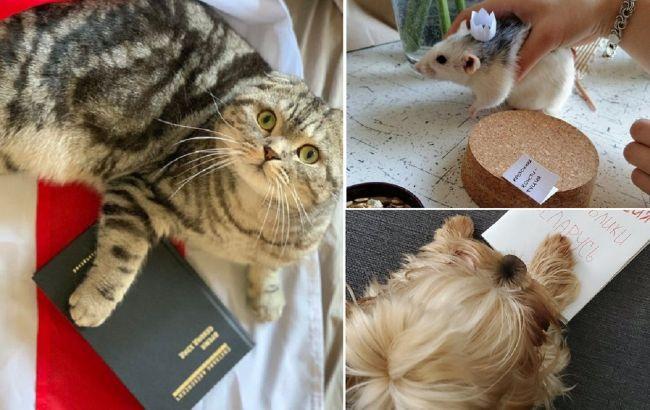 Якщо диктатор, то тільки такий: білоруси масово інавгурують котів, собак та мишей (фото)