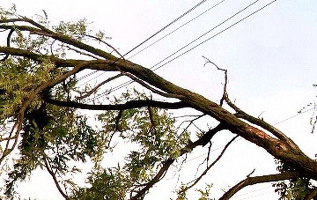 Фото: ураган в Полтаві повалив дерева