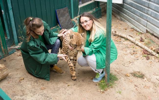 Фото: В Украине развивается зоозащитная деятельность