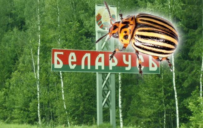 """В Карпатах ветераны АТО наказали белорусских туристов из-за """"колорадской"""" ленты (фото, видео)"""