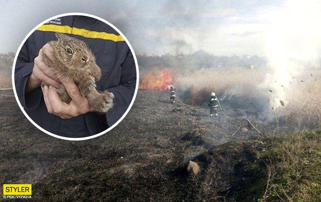 Пожарв природном парке под Одессой: в огне погибли уникальные животные и птицы