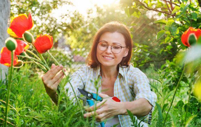 Собираем букет на Троицу правильно: какие растения станут оберегами
