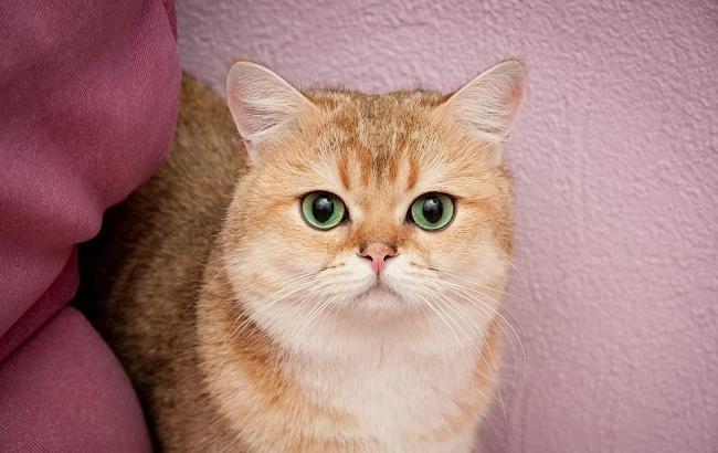 Фото: Кот (sunny-cat.ru)