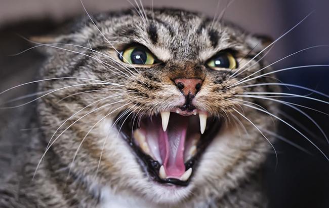 У Харківській області скажений кіт покусав дітей