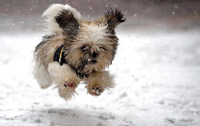 Вгосударстве Украина снег, температура опустится до-14