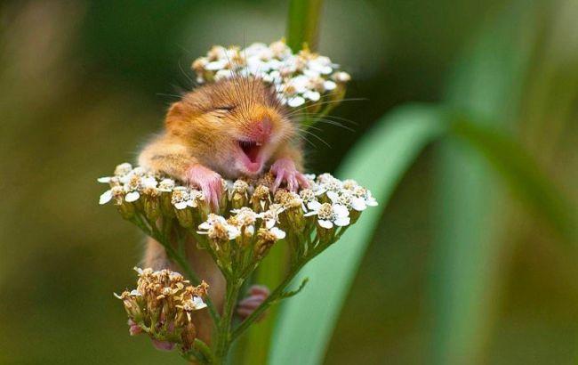 Фото: Дикие животные (Comedy Wildlife Photography Awards)