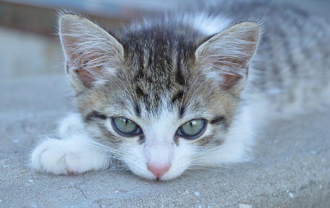 Фото: Котик (pixabay.com/Avili)