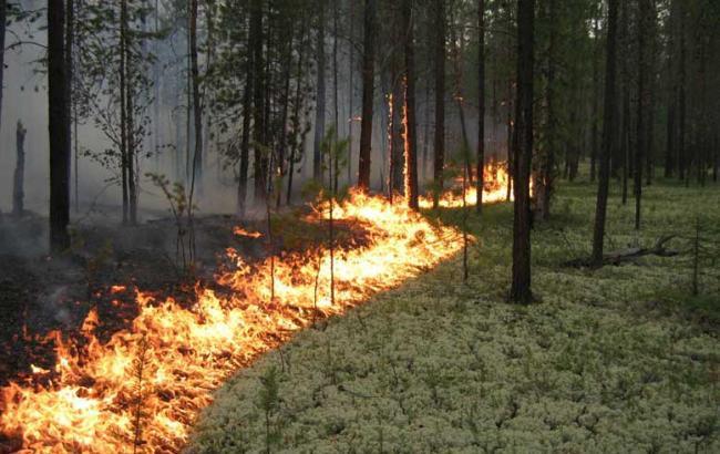 В зоні АТО за липень постраждало до 200 га лісу, - МінАП