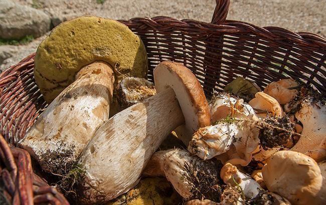 Під Харковом п'ятеро осіб отруїлися грибами