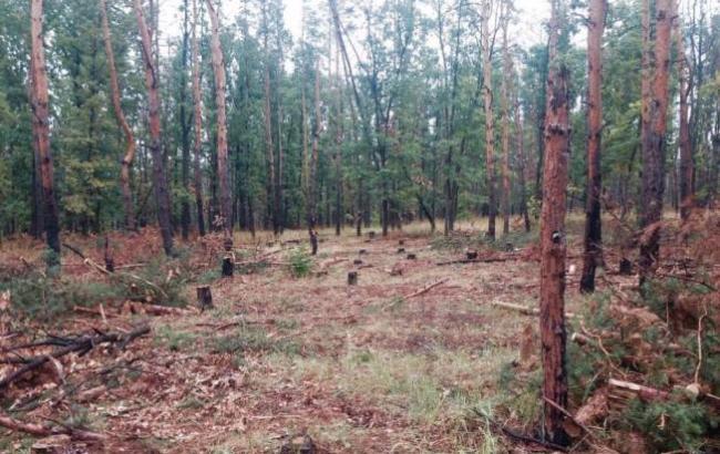 Фото: Ліс в зоні АТО (facebook.com/ukrjournalistin)