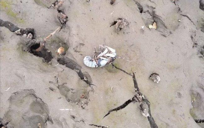 """Затоплениешахты """"Юнком"""": в сети показали экологическую ситуацию на Донбассе (фото)"""