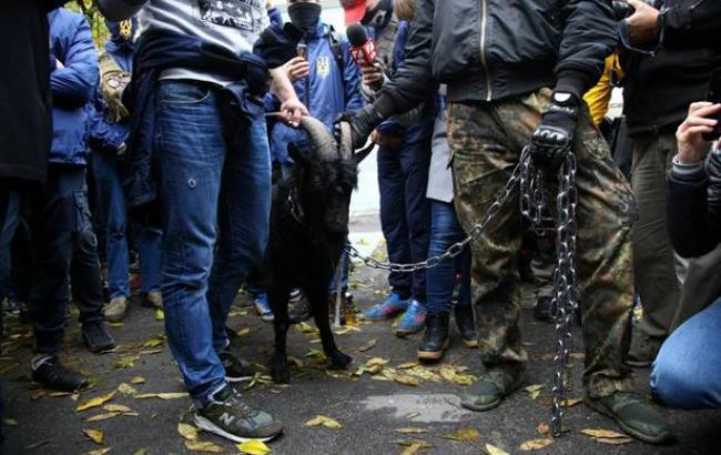 В Киеве под стены посольства Чехии активисты привели рогатый скот (фоторепортаж)