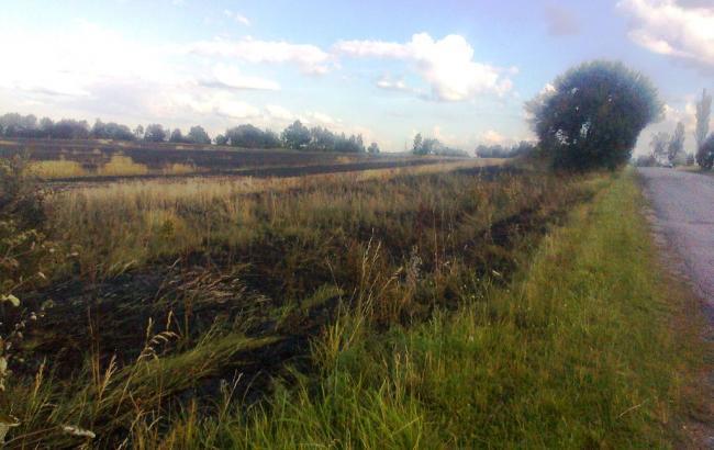 У Житомирській області вигоріло 21 га пшениці