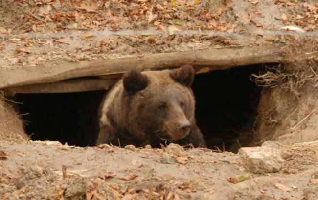 Фото: Медведь (facebook.com/pg/EcoHalychWildlifeRehab)