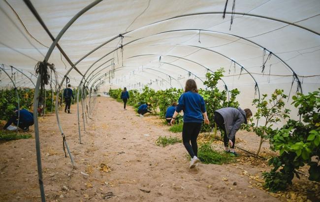 Фото: Сельское хозяйство в Израиле (facebook.com/ualeadershipacademy)