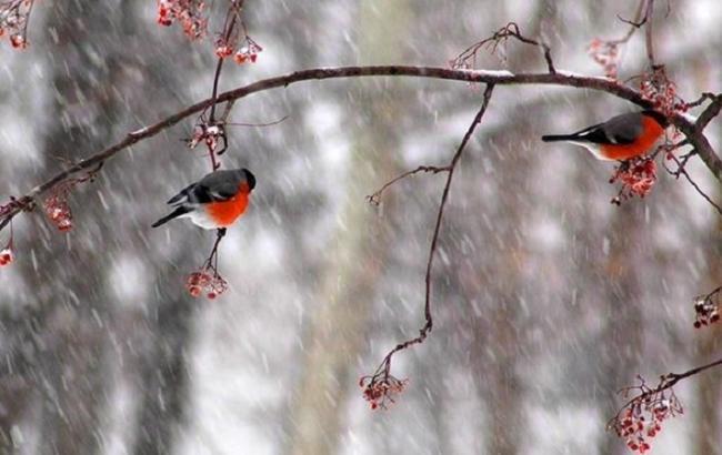 Фото: на заході очікуються дощі з мокрим снігом