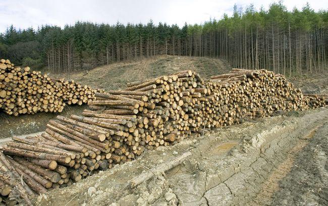Мораторий на вывоз леса: отменить нельзя оставить