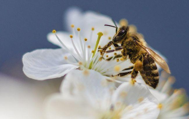 Укус пчелы может быть смертельно опасным: кто в зоне риска и как защититься