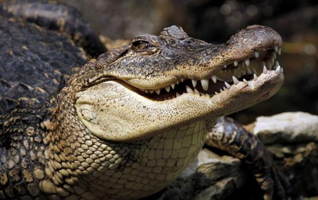 Фото: Крокодили