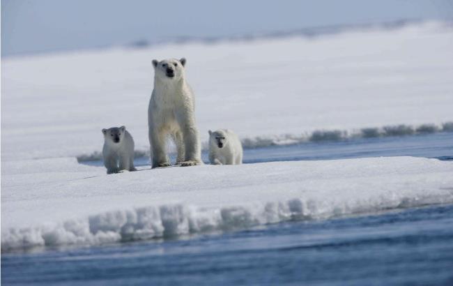 Ученые рассказали, когда полностью растают ледники Арктики