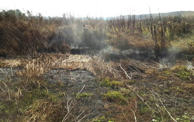Фото: пожар торфа в Полтавской области