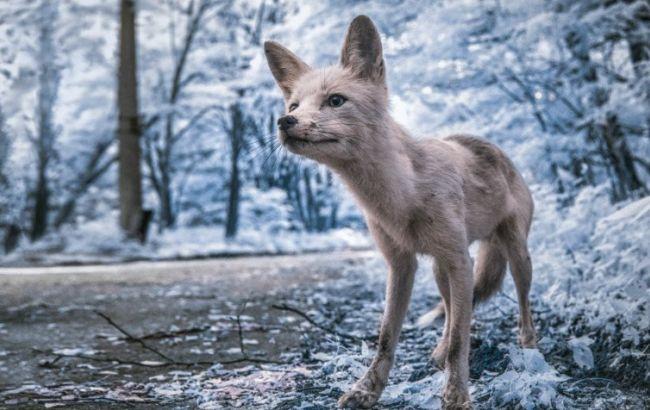 Фото: Чорнобиль (petapixel.com)