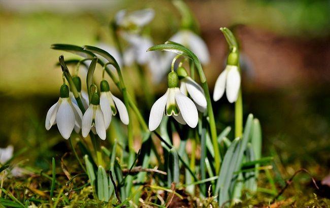 Синоптики розповіли, в які області прийде справжня весна