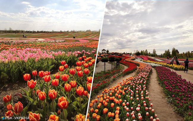 Успейте увидеть. Живописные цветочные поля Украины для майского уикенда