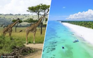Новое направление для массового туризма: отдохнуть на пляжах Кении осенью можно по доступным ценам