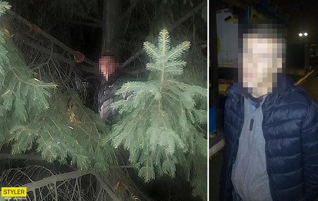 Залез на ель: во Львове полицейские обнаружили грабителя на дереве