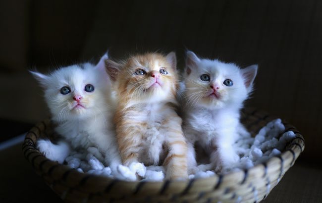 В Одессе разгорелся скандал из-за живодеров: заморили голодом 40 котят