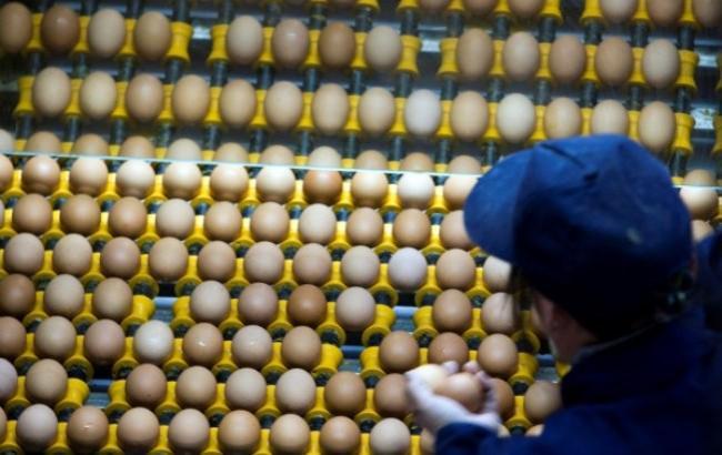 Израиль отказался от импорта яиц из Украины