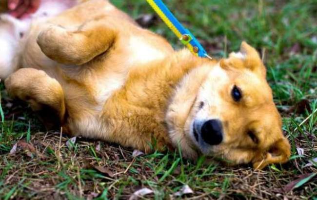 Журналисты нашли новых владельцев собаке, пережившей смерть хозяина
