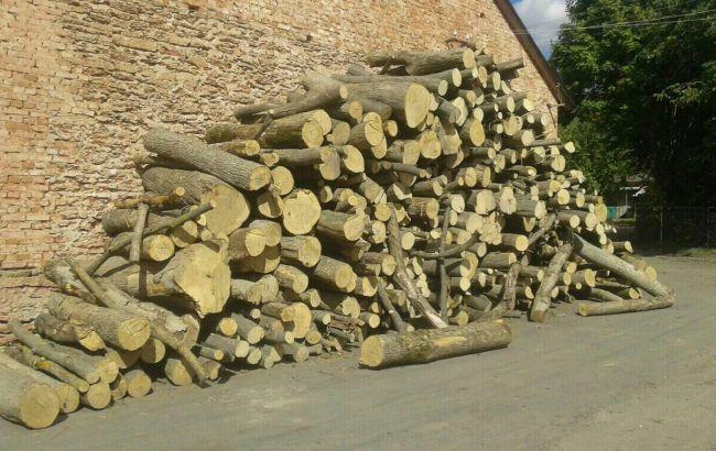 Фото: СБУ викрила механізм розкрадання чиновниками цінних порід деревини