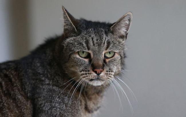 Фото кота долгожителя
