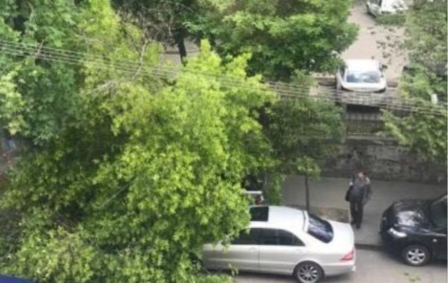 Фото: Дерево (facebook.com/KyivOperativ)