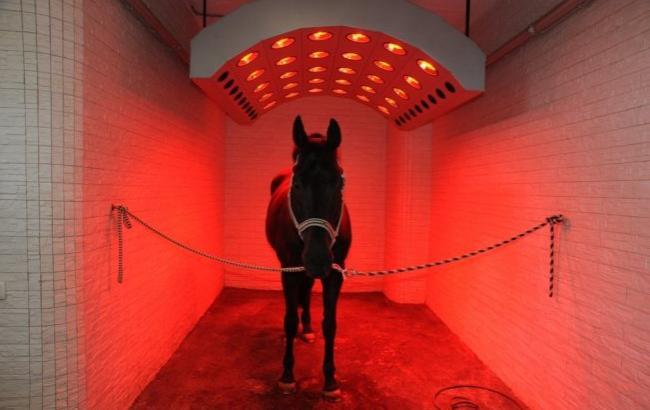 Фото: Солярій для коней (uahorses.com)