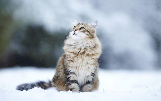 Фото: в Украине преимущественно снег