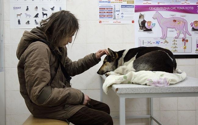 Фото: Волонтер Сергей успокаивает дворовую собаку, которую привез в клинику на обследование (РБК-Украина)