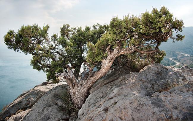 В МинВОТ заявили о риске исчезновения уникальных экосистем Крыма