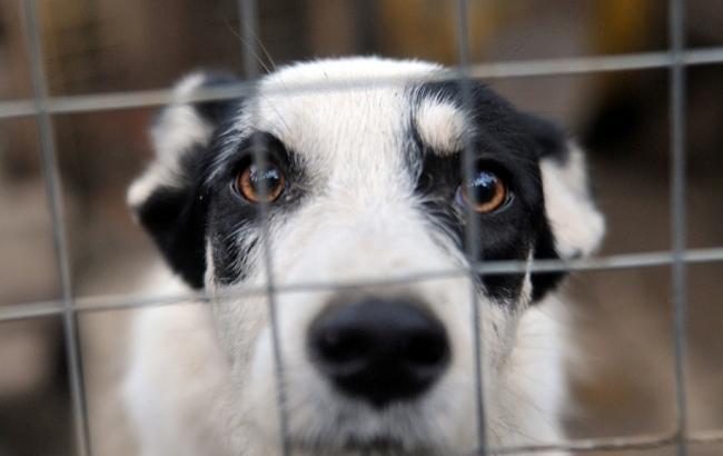 Фото: Собака (nsktv.ru)