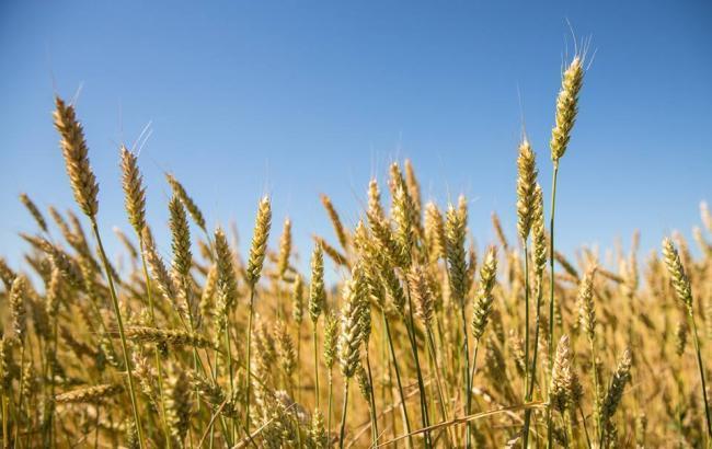 Украинские аграрии намолотили первый миллион тонн зерна