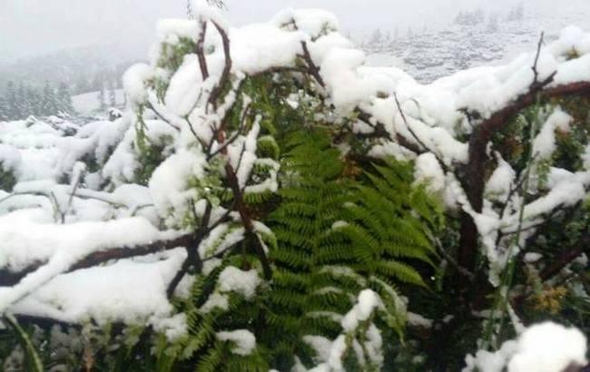 """""""Хотите в сказку """"Двенадцать месяцев""""?"""": в Карпатах выпал снег"""