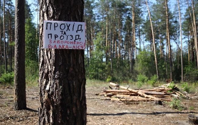 """Экологи-активисты показали, как """"лесная мафия"""" вырубает многовековой лес в Пуща-Водице (фоторепортаж)"""