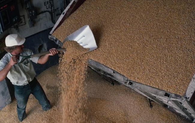 Запасы продовольственного зерна составляют 6,5 млн тонн, - Минагрополитики