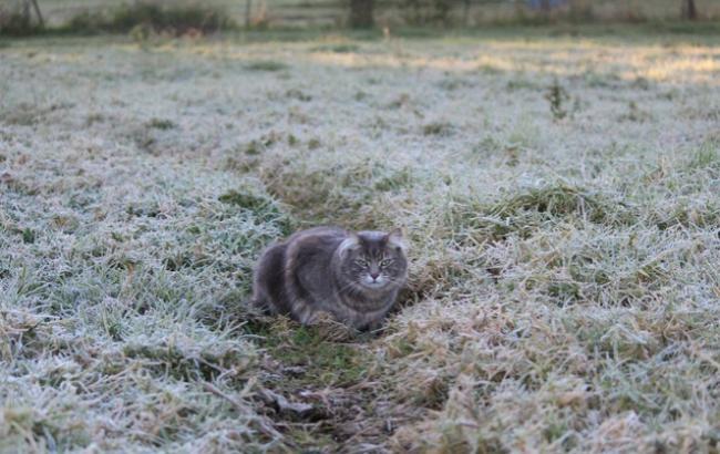 Фото: Первые морозы (InfoResist)
